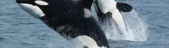 killer-whales-life-documentary