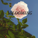 @imfwmusic is Blooming