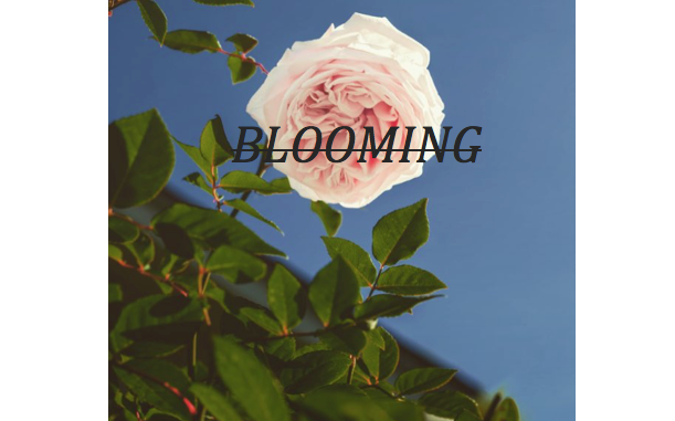 https://www.imoveilive.com/wp-content/uploads/2017/12/Blooming.png